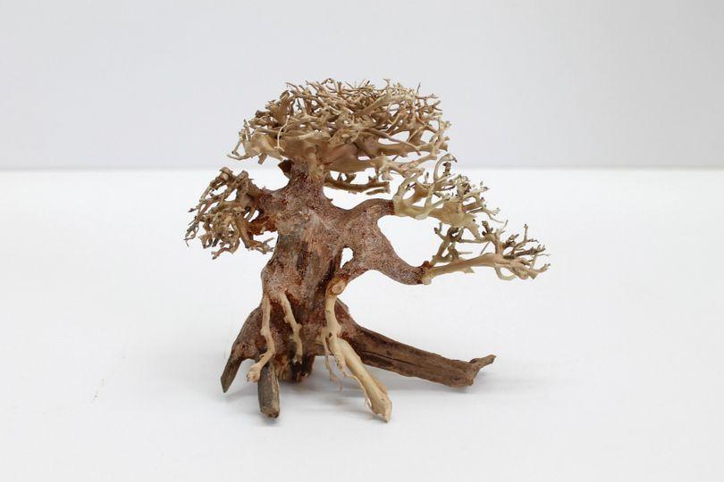Bonsai Baum M original Foto Nr.10152 Wurzel Holz Aquarium Deko Aquascaping