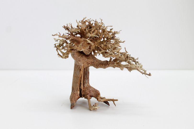Bonsai Baum M original Foto Nr.10164 Wurzel Holz Aquarium Deko Aquascaping