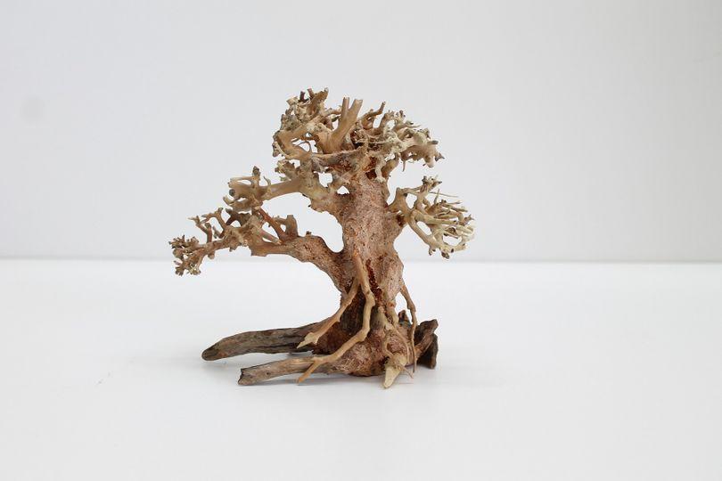 Bonsai Baum M original Foto Nr.10169 Wurzel Holz Aquarium Deko Aquascaping