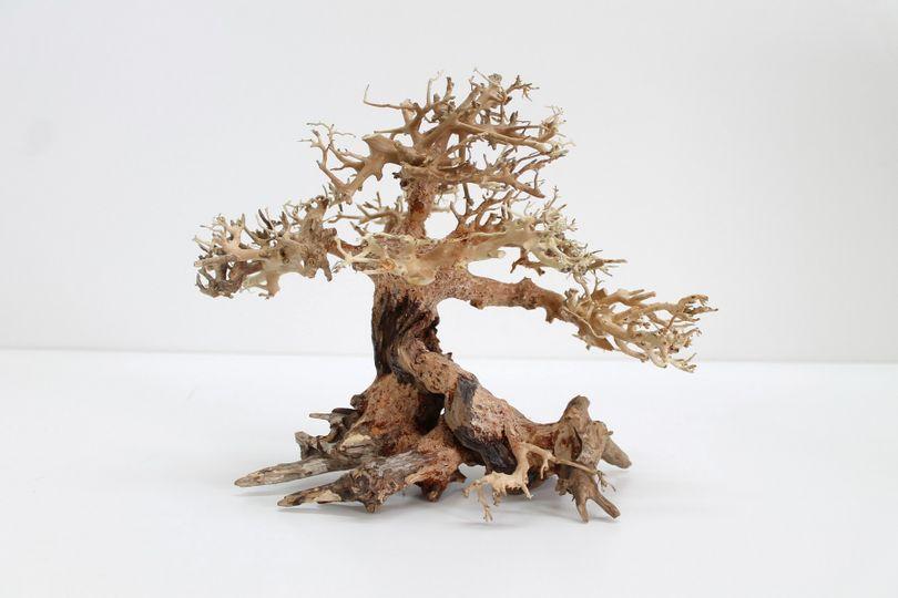 Bonsai Baum L original Foto Nr.10221 Wurzel Holz Aquarium Deko Aquascaping