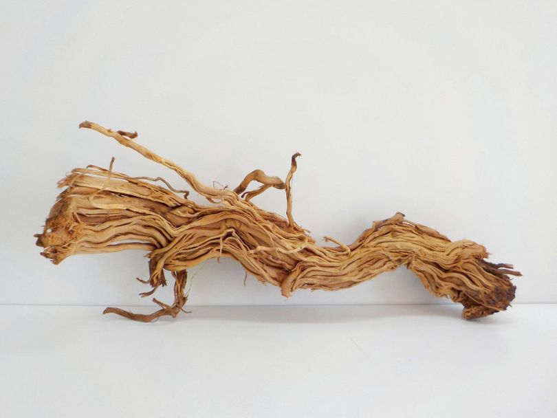 L Drachen Wurzel Maße 74x30x33 Nr.8336