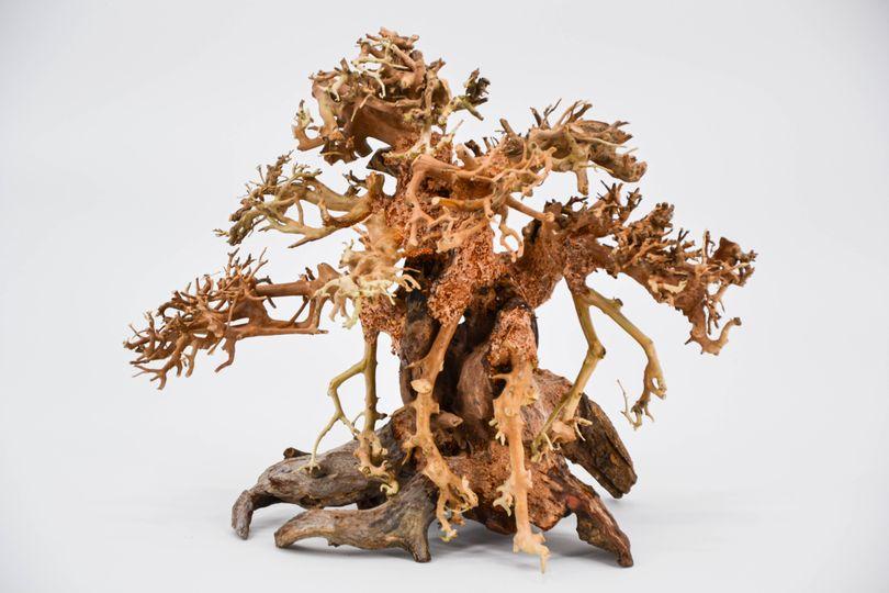 Bonsai Baum L original Foto Nr.11113 Wurzel Holz Aquarium Deko Aquascaping