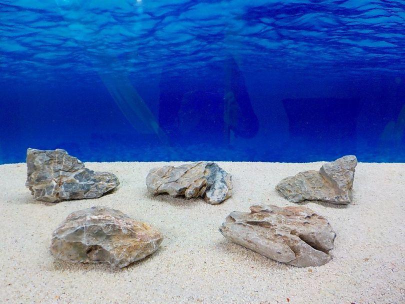 "Aquarium graue Dekosteine Seiryu Art.67 ""original Foto"" Größe M 12-18cm Nr.8484"