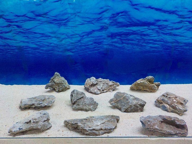 "Aquarium graue Dekosteine Seiryu Art.67 ""original Foto"" Größe M 12-18cm Nr.8466"