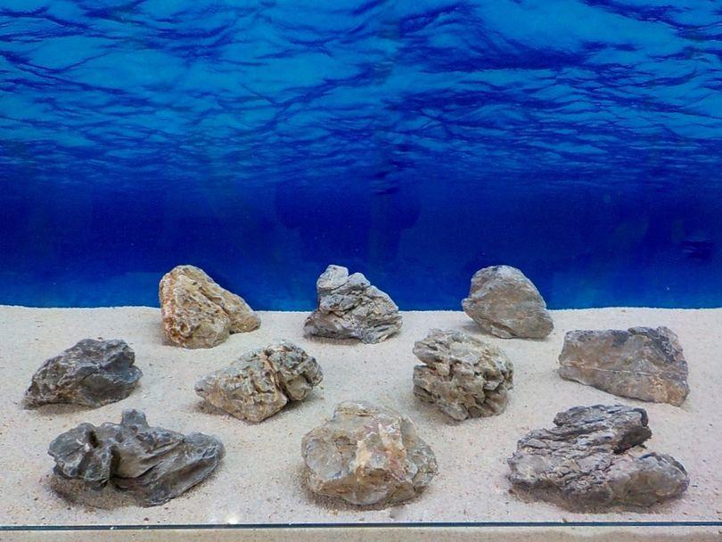 "Aquarium graue Dekosteine Seiryu Art.67 ""original Foto"" Größe M 12-18cm Nr.8468"