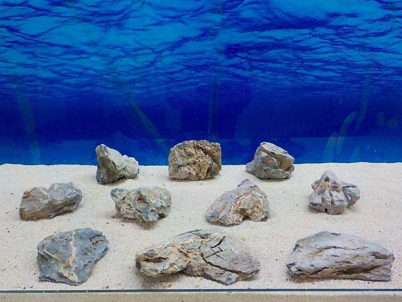 "Aquarium graue Dekosteine Seiryu Art.67 ""original Foto"" Größe M 12-18cm Nr.8476"