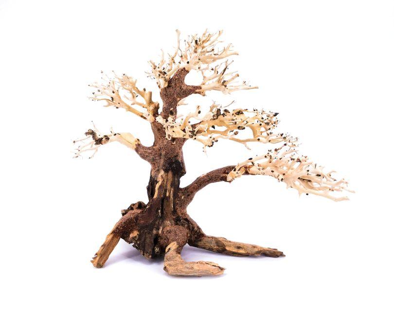 Bonsai Baum L original Foto Nr.11152 Wurzel Holz Aquarium Deko Aquascaping