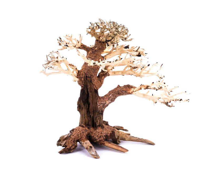 Bonsai Baum L original Foto Nr.11154 Wurzel Holz Aquarium Deko Aquascaping