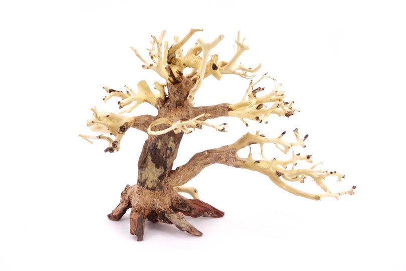 Bonsai Baum M original Foto Nr.10348 Wurzel Holz Aquarium Deko Aquascaping