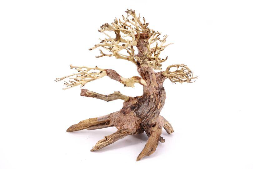 Bonsai Baum M original Foto Nr.10356 Wurzel Holz Aquarium Deko Aquascaping