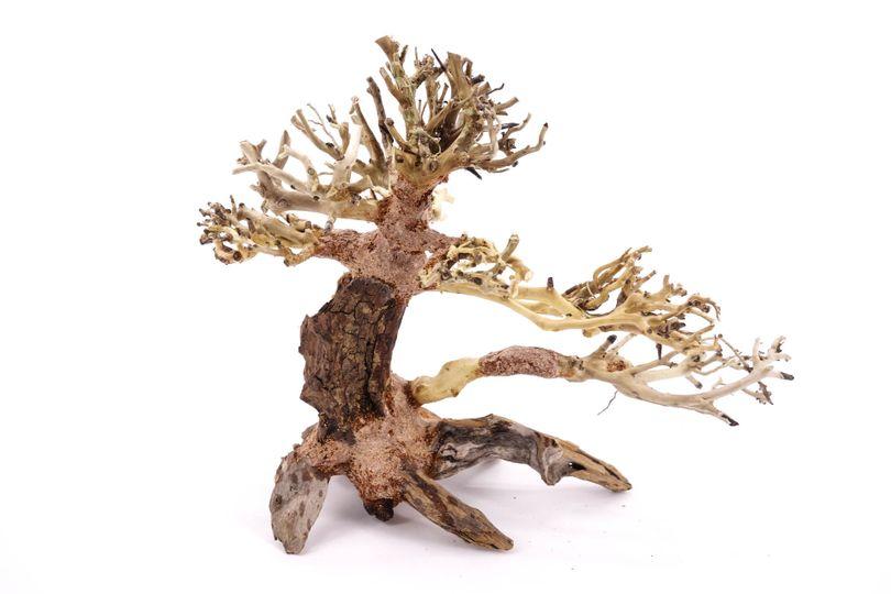Bonsai Baum M original Foto Nr.10359 Wurzel Holz Aquarium Deko Aquascaping