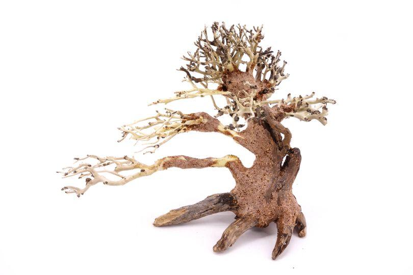 Bonsai Baum M original Foto Nr.10380 Wurzel Holz Aquarium Deko Aquascaping