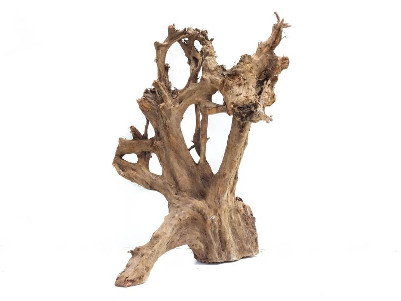 XL Mangrovenwurzel Maße 33x26x47 Nr.9019