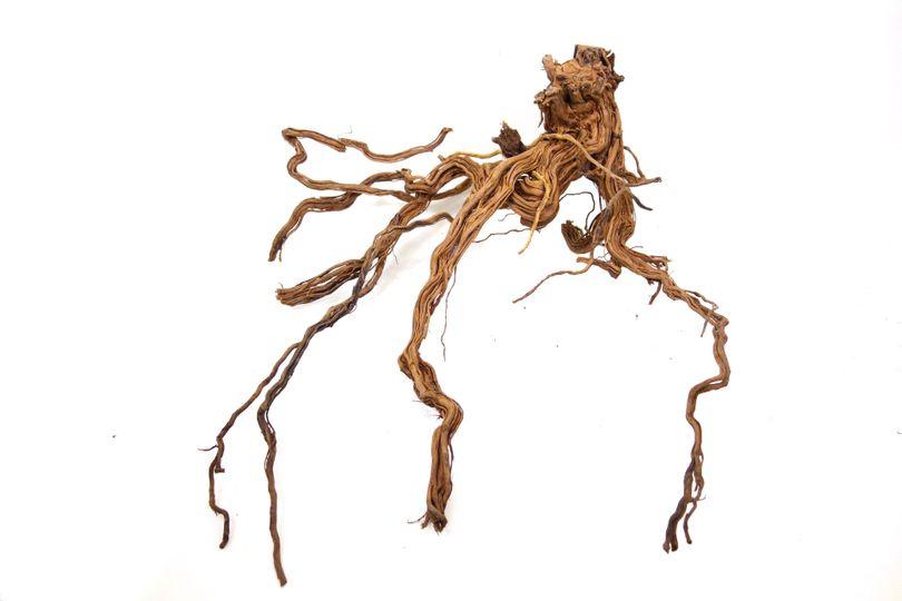 XL Drachen Wurzel Nr.9435 Holz Deko Aquascaping