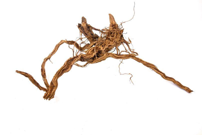 XL Drachen Wurzel Nr.9444 Holz Deko Aquascaping