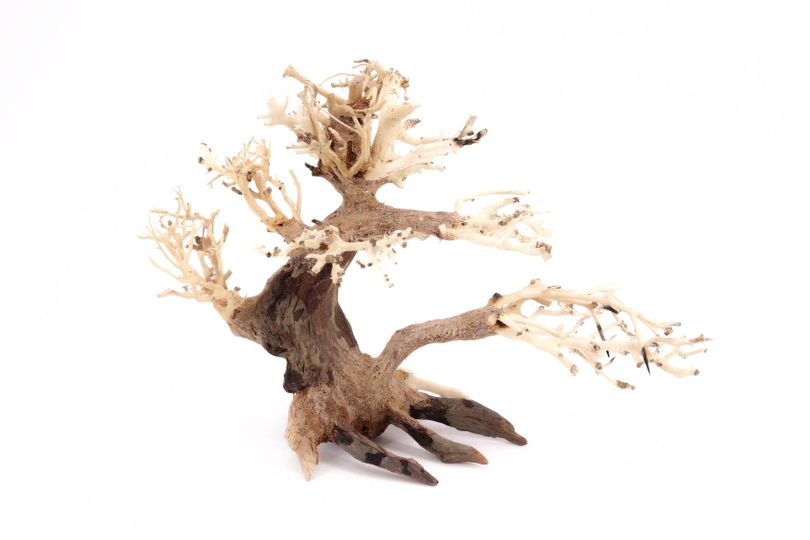 Bonsai Baum M original Foto Nr.10388 Wurzel Holz Aquarium Deko Aquascaping