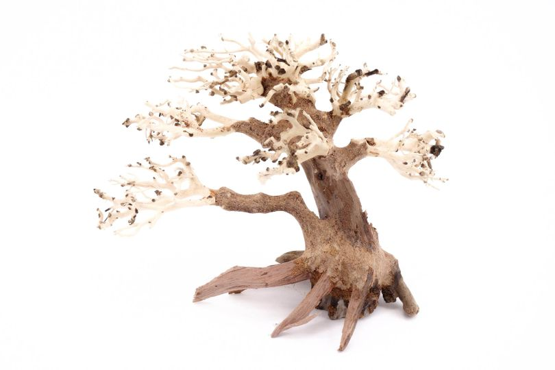 Bonsai Baum M original Foto Nr.10389 Wurzel Holz Aquarium Deko Aquascaping