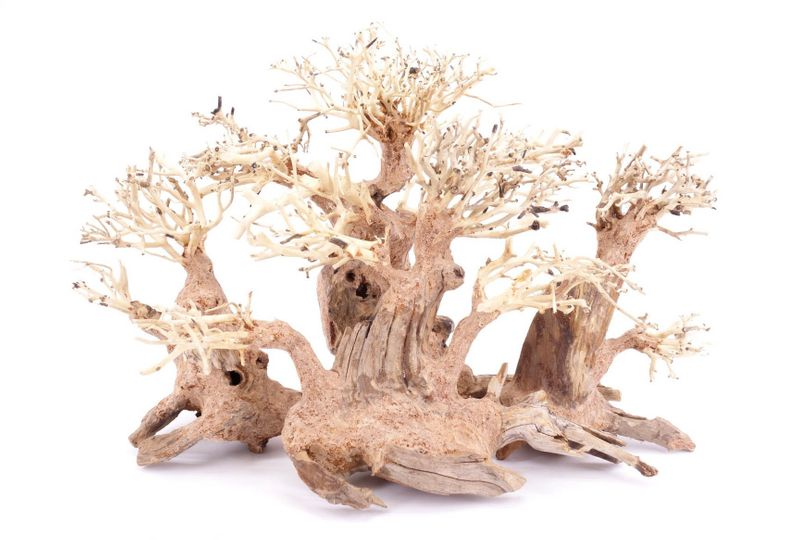 Aquarium Wurzel Bonsai Exclusive L original Foto Nr.18083 Holz Deko Aquascaping