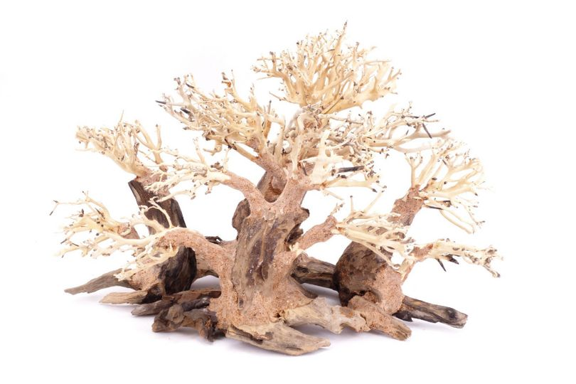 Aquarium Wurzel Bonsai Exclusive L original Foto Nr.18087 Holz Deko Aquascaping