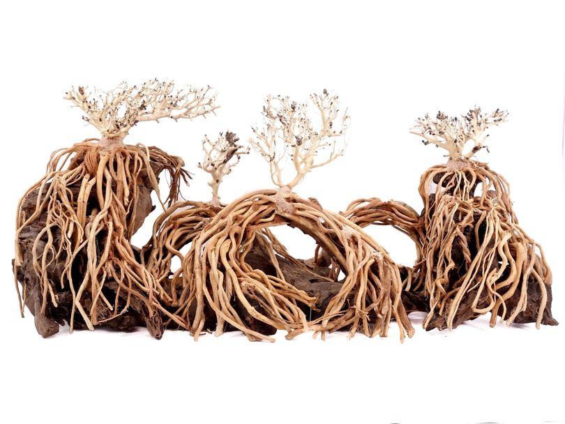 Aquarium Wurzel Bonsai Exclusive Größe XL 90x40cm Nr.108 Holz Deko Aquascaping