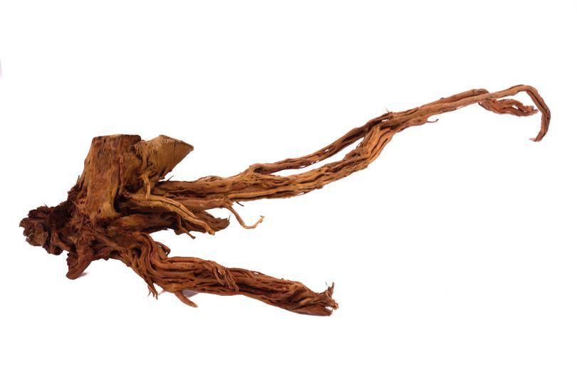 L Drachen Wurzel Nr.9804 Holz Deko Aquascaping
