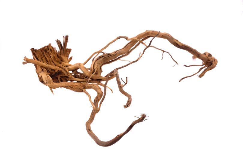 L Drachen Wurzel Nr.9806 Holz Deko Aquascaping