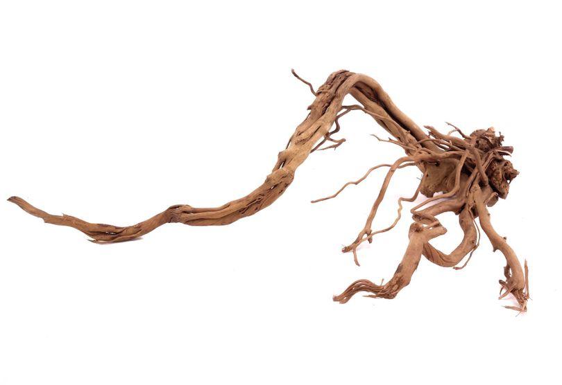 L Drachen Wurzel Nr.9830 Holz Deko Aquascaping