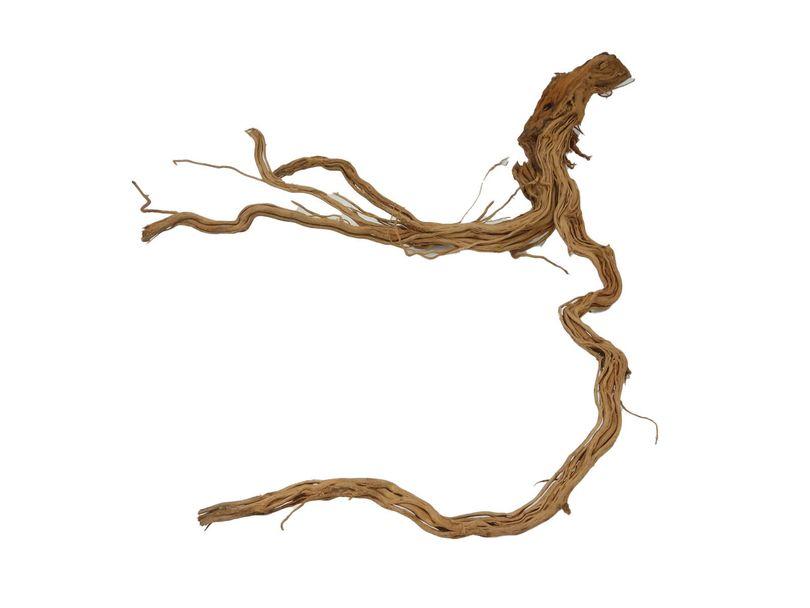 XL Drachen Wurzel Nr.1562 Holz Deko Aquascaping