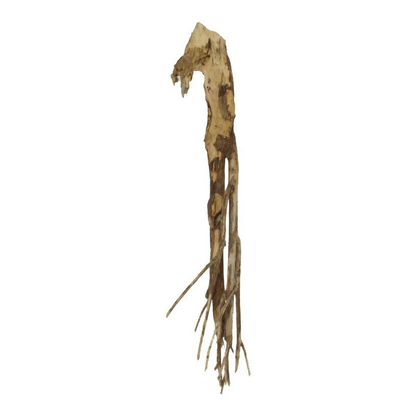 XL Talawa Wurzel Nr.2386