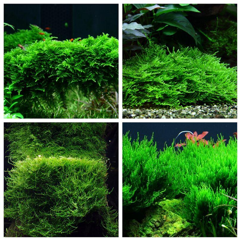 Moos Set mit 4 Tropica in Vitro Pflanzen Aquariumpflanzenset Nr.56