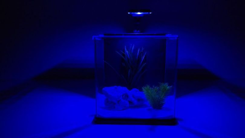Aqua Orion 25 in schwarz Nano Aquarium Komplettaquarium Mini +LED & MONDLICHT! Bild 2