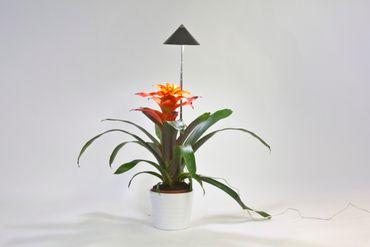 SUNLiTE Pflanzenlampe, grau