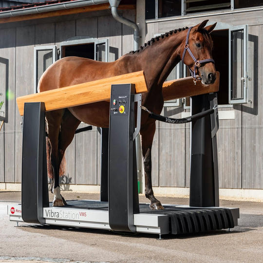 ms Horse Trainingsgeräte