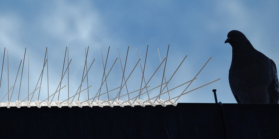 16.4 feet (5 meter) 4 row pigeon spikes on polycarbonat base - high quality solution for bird control spikes – Bild 9