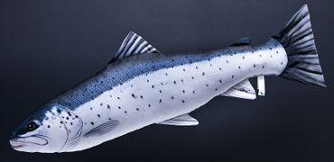 Gaby Stofffisch Meerforelle mit 51 cm Länge – Bild 1