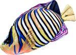 Gaby Stofffisch Pfauenauge Kaiser mit 56 cm Länge 001