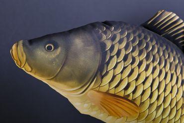 Gaby Stofffisch Schuppenkarpfen – Bild 9