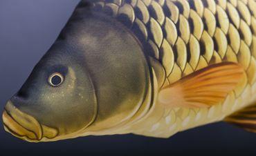 Gaby Stofffisch Schuppenkarpfen – Bild 5