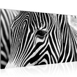 Afrika Zebra BILD KUNSTDRUCK  - AUF VLIES LEINWAND - XXL DEKORATION  00141P  Bild 1