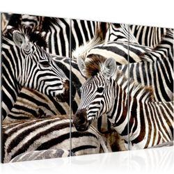 Afrika Zebra BILD KUNSTDRUCK  - AUF VLIES LEINWAND - XXL DEKORATION  000831P  Bild 2