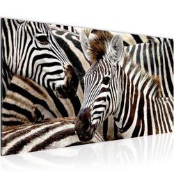 Afrika Zebra BILD KUNSTDRUCK  - AUF VLIES LEINWAND - XXL DEKORATION  000812P  Bild 2