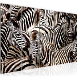 Afrika Zebra BILD KUNSTDRUCK  - AUF VLIES LEINWAND - XXL DEKORATION  000855P  Bild 1
