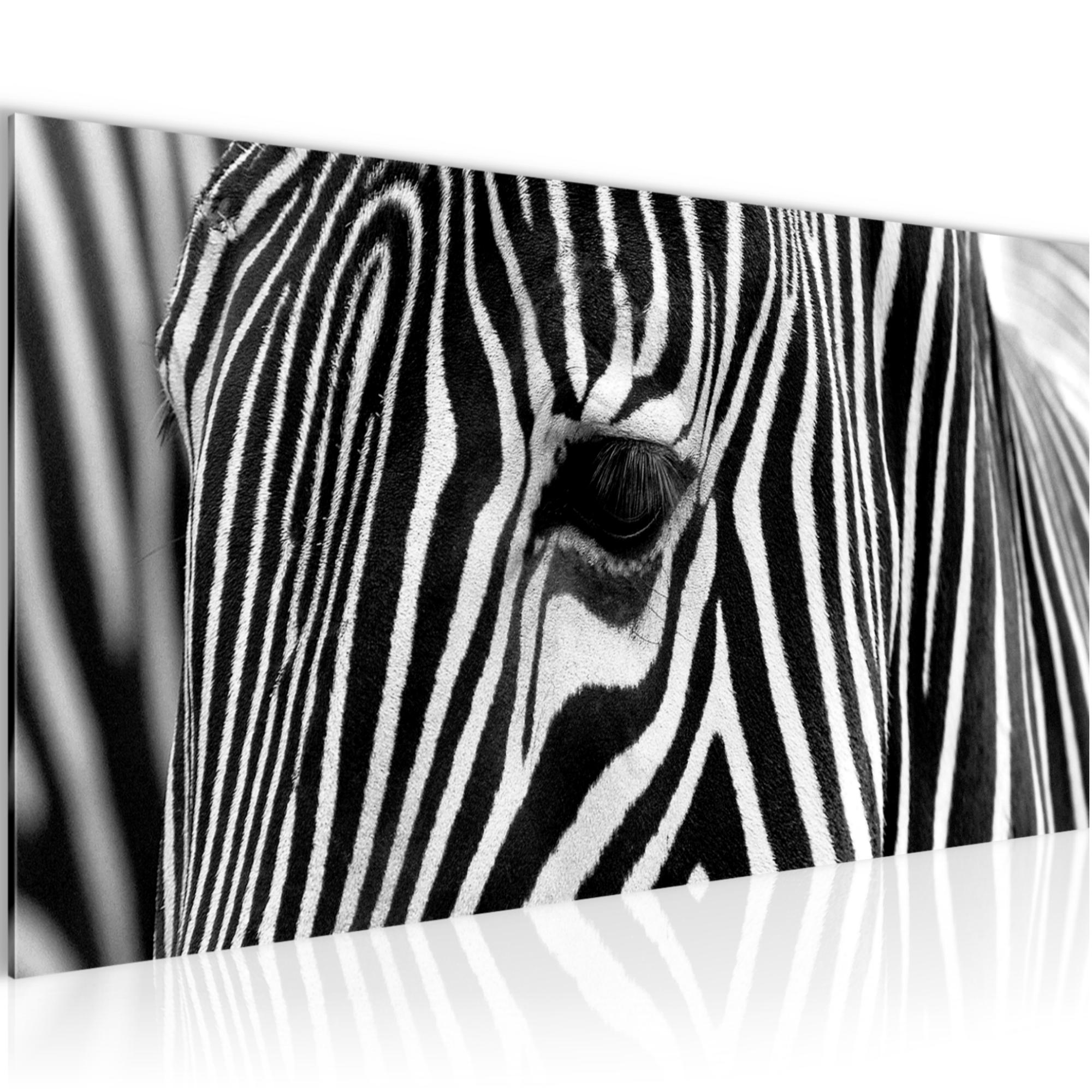 afrika zebra bild kunstdruck auf vlies leinwand xxl dekoration 001412p. Black Bedroom Furniture Sets. Home Design Ideas