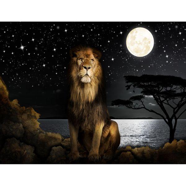 Afrika Löwe VLIES FOTO WANDTAPETE - XXL DEKORATION RUNA  9445aP