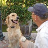 PetSafe Hundezaun unsichtbar Hunde Rückhaltesystem