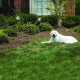 PetSafe Hundebellen abgewöhnen / Antibell Hundeerziehung