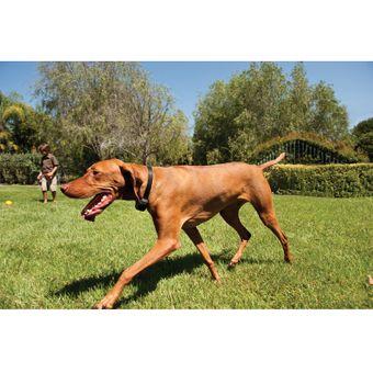 PetSafe Unsichtbarer Hundezaun Rückhaltesystem für Hunde – Bild $_i