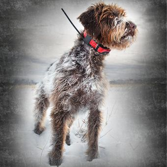 SportDog TEK Series 2.0 Halsband Peilsender GPS Hunde System – Bild $_i