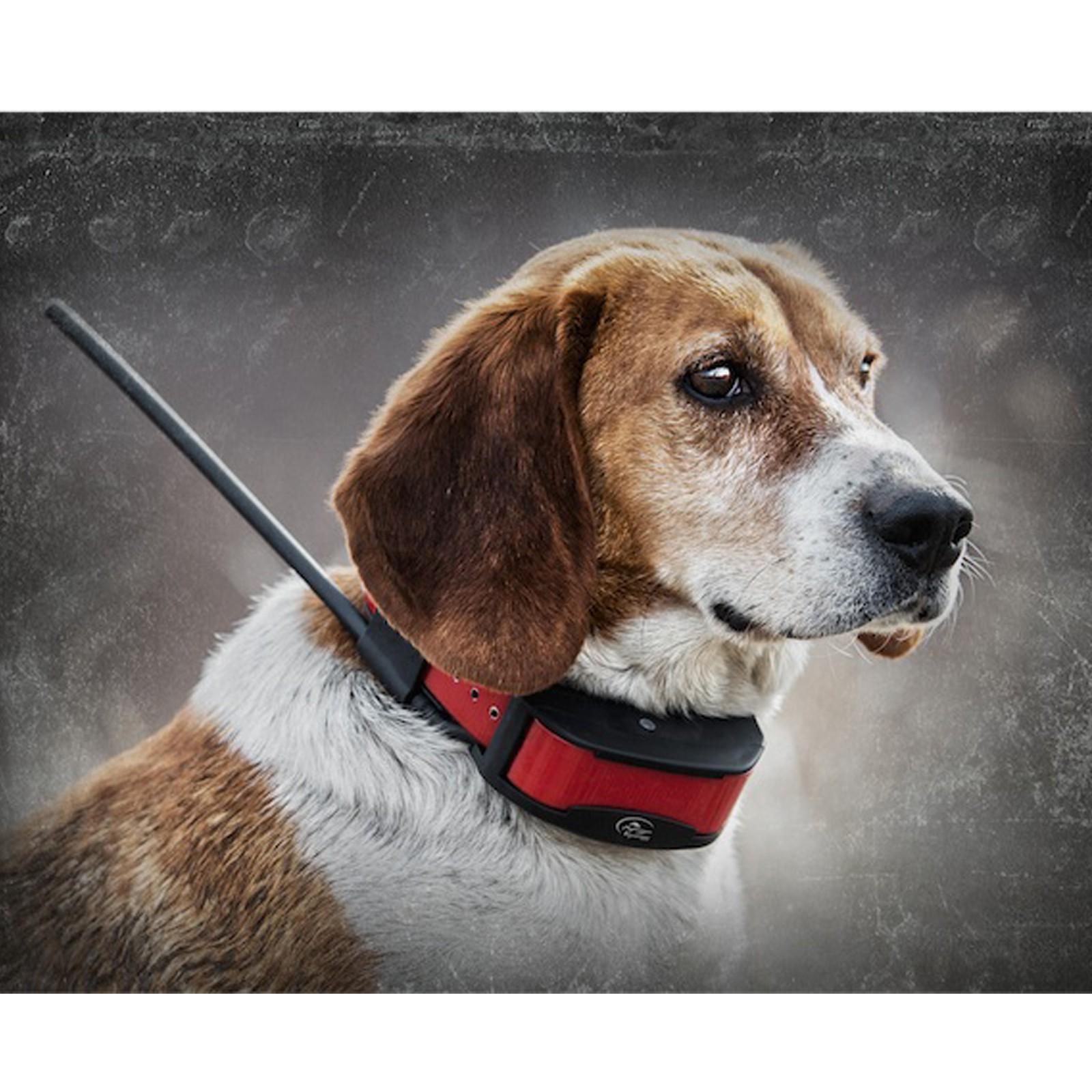 Sportdog Tek Series 2 0 Halsband Ferntrainer Gps Hunde System