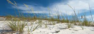 Nickolay Khoroshkov: Sanddüne und Gräser unter schönem blauem Himmel. Destin , Florida, USA - Schlüsselbrett 14,8 x 40 cm – Bild 1